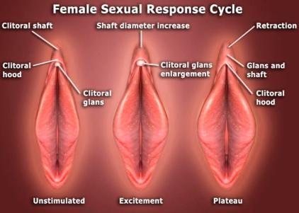 trouver le clitoris